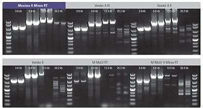 Amplification of targets up to 20 kb in two step RT-PCR