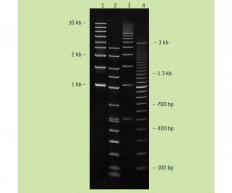 Resolution of SeaPlaque agarose
