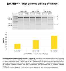High genome editing efficiency with jetCRISPR