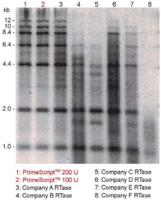 Efficient synthesis of long cDNA compared to other RTs