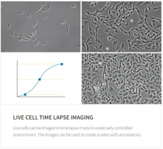 Time lapse live cell imaging with the CELENA® X
