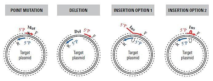 Point mutation, deletion and insertion - site-directed mutagenesis
