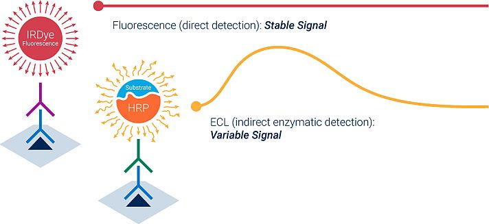 Fluorescent (direct) detection versus ECL (indirect) detection